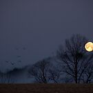 Full Moon Migration by Michael  Dreese