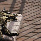 Lazy days by Catherine Davis
