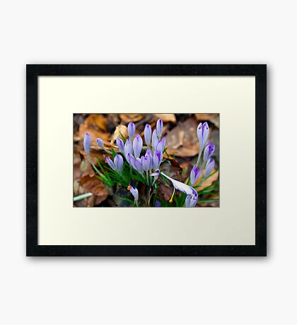 Beginnings of Spring Framed Print