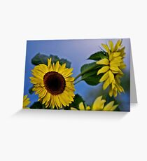 Sunflowers for my Sister Greeting Card