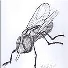 Musca Domestica Linnaeus by max motmans