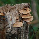 Stump Huggers.... by zpawpaw