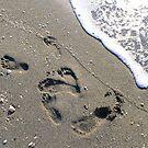 Footprints in the Sand by Rosalie Scanlon