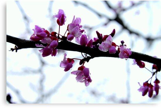 Spring Sprinkles. by jordi2010