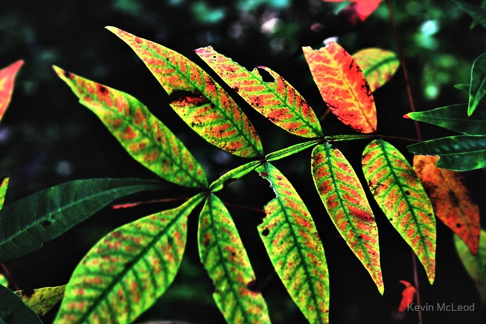 Leaves by Kevin McLeod