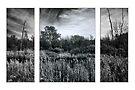 The Marsh triptych by PhotosByHealy