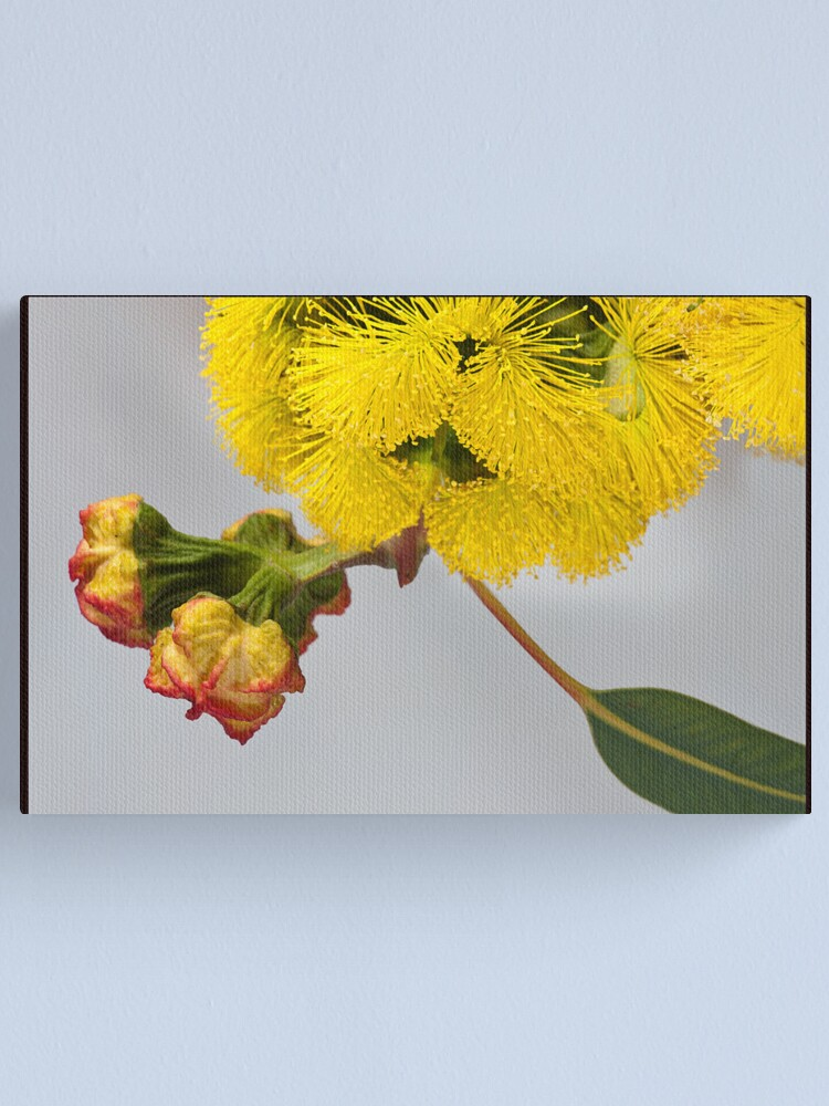 Alternate view of By Gum Canvas Print