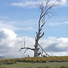 Lifeless tree by Margaret  Hyde