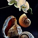 Orchid with three seashells by andreisky