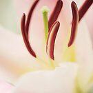 Preciousness among petals by dhmig