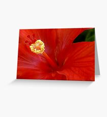The Reddest Red is Hibiscus Red Greeting Card