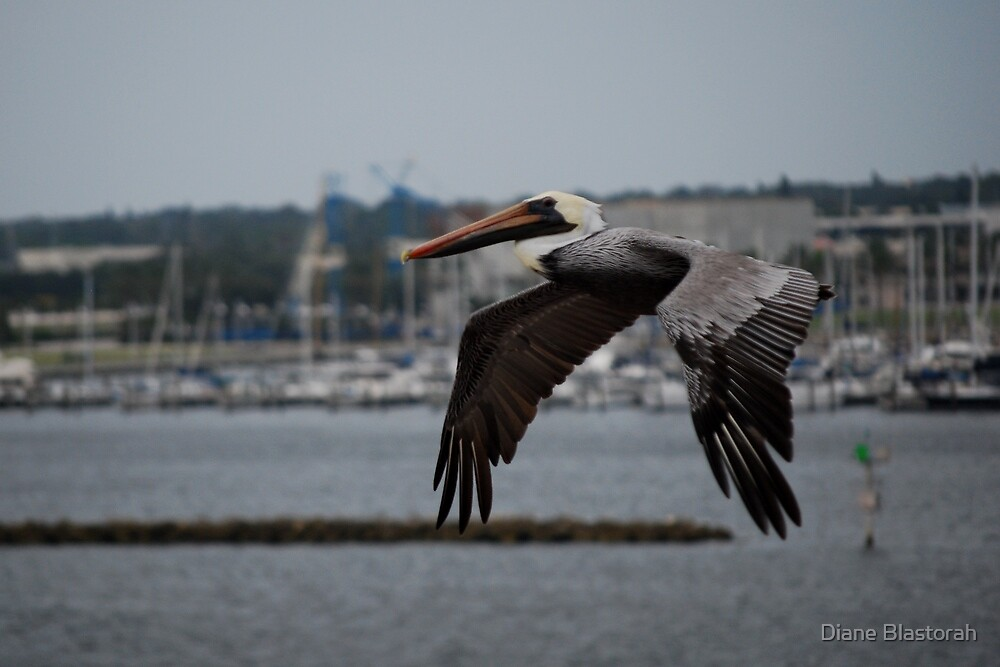 Flying Under the Radar by Diane Blastorah
