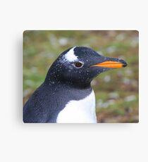 Gentoo Penguin - Head Shot Canvas Print