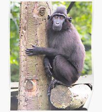 sad monkey man Poster