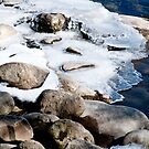 Icy Shore by jules572