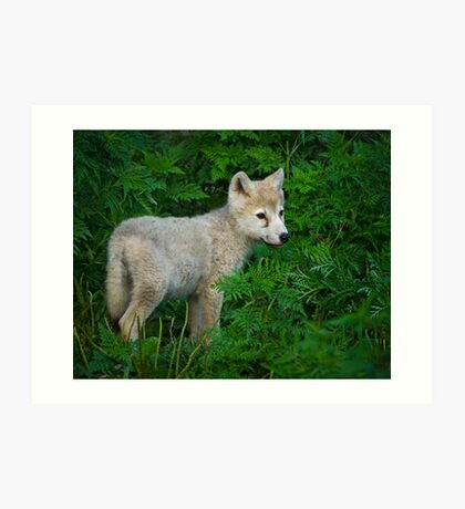 Young Pup  Art Print