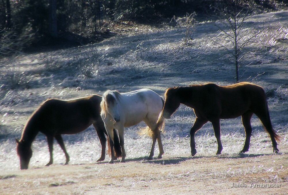 Horses in Winter by Jamie  Armbruster