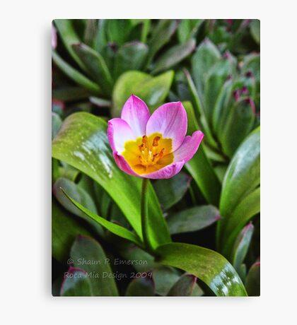 Tiny Tulip Canvas Print