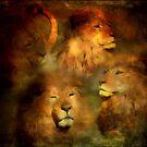 Lion by zzsuzsa
