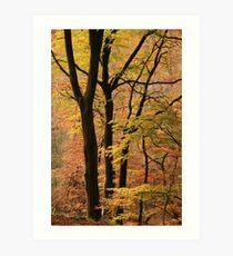 Autumn in Silent Valley Art Print