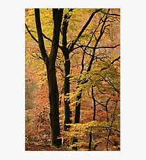 Autumn in Silent Valley Photographic Print