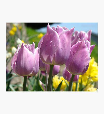 Floral Spring Lavender Tulip Flowers Garden Baslee Troutman Photographic Print
