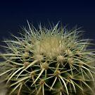 Cactus by pixel-cafe .de