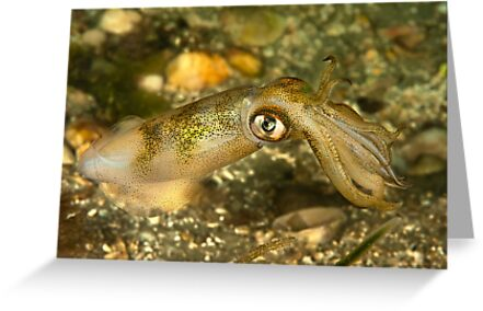 Seductive Squid by MattTworkowski