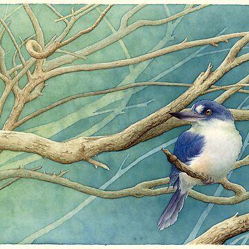 Forest kingfisher (Todiramphus macleayii) by LauraGrogan