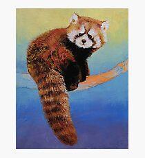 Cute Red Panda Photographic Print
