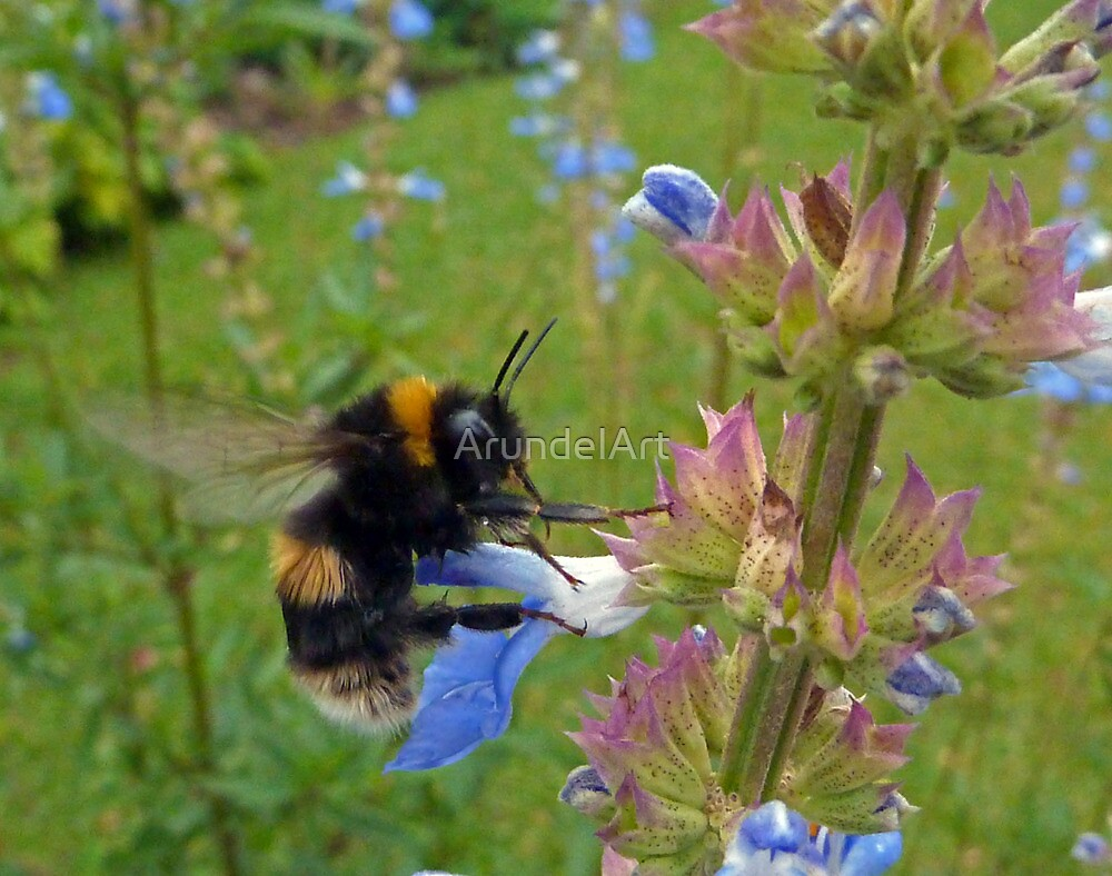 Bumble in Blue by ArundelArt