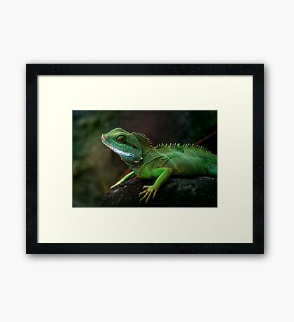 Little dragon 3 Framed Print