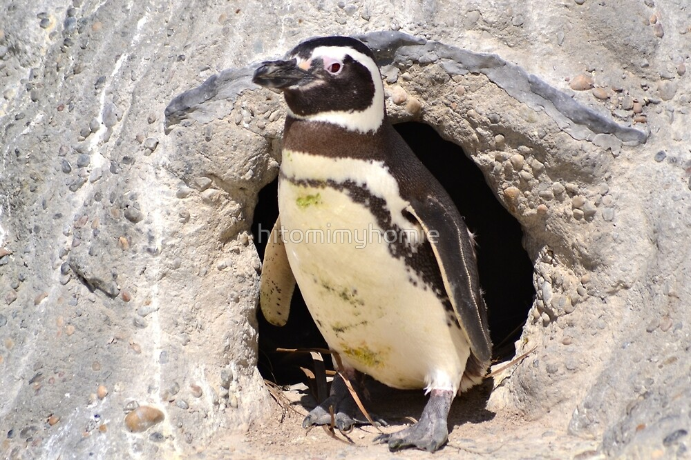 Penguin by hitomimyhomie
