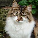 Felix in thoughtful mode by Cat-Artist