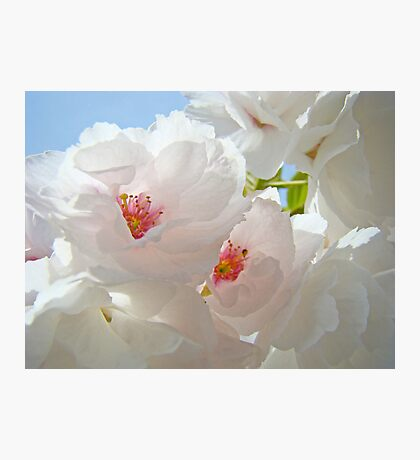 Tree Blossom Flowers White Pink Floral Baslee Troutman Photographic Print