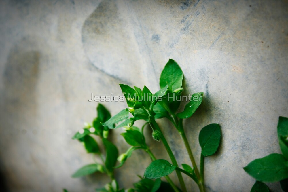 stonelife by Jessica Mullins-Hunter