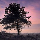 Tree in Morninglight by ienemien