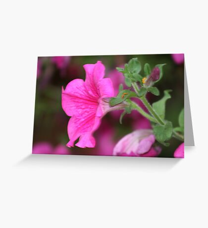 Flower in Covent Garden Greeting Card