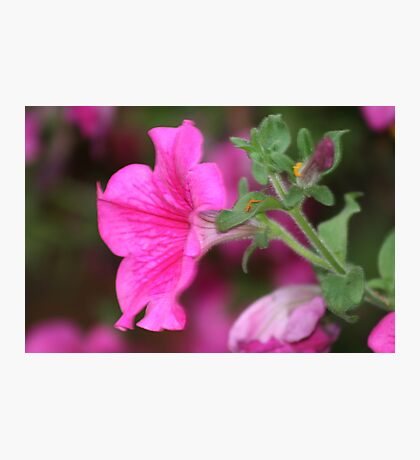 Flower in Covent Garden Photographic Print