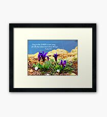 Spring on sea rocks  Framed Print