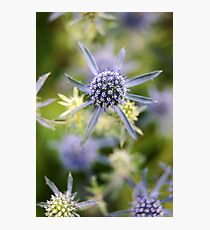 Blue Spike Photographic Print