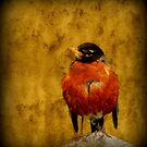 Textured Robin by Robert Miesner