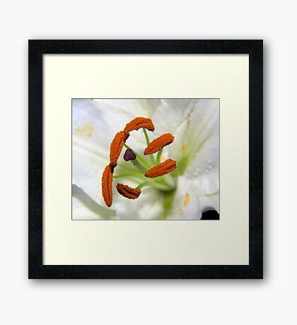 Lily Stamens Framed Print