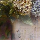 hydrangeas and that vase by picketty