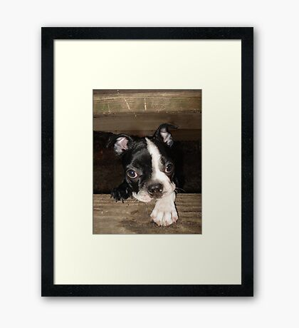 Sophie Framed Print