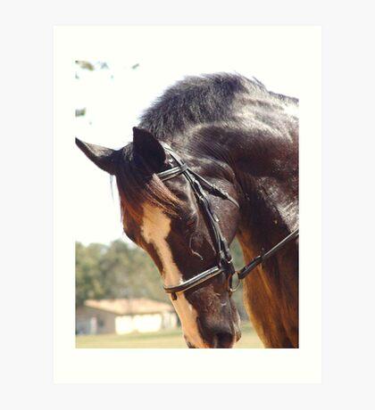 Elodie's Horse Art Print