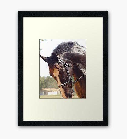 Elodie's Horse Framed Print