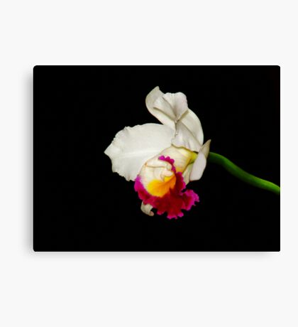 Orchid Collection - 1 Canvas Print