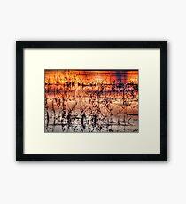 Sunset Reeds Framed Print