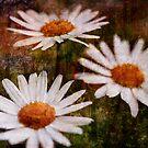 Oops-a-daisies by chasingsooz